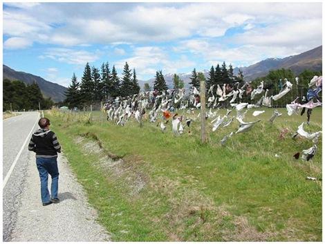 foto de La clôture Cardrona Bra de la Nouvelle Zélande / BeeVar com